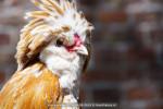 Graskaasdag-2015-06-06-9614 © HansPieters.nl