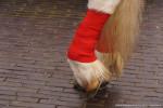 Intocht Sinterklaas-20141115-4903 © HansPieters.nl