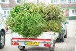 Kerstbomen Molenvliet-0113-03