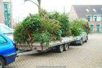 Kerstbomen Molenvliet-0113-05
