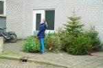 Kerstbomen Molenvliet-0113-06