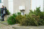 Kerstbomen Molenvliet-0113-07