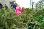Kerstbomen Molenvliet-0113-18
