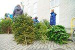 Kerstbomen Molenvliet-0113-19