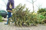 Kerstbomen Molenvliet-0113-21