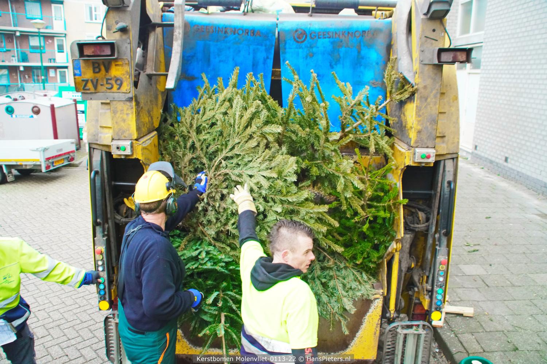 Kerstbomen Molenvliet