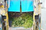 Kerstbomen Molenvliet-0113-23