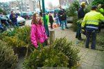 Kerstbomen Molenvliet-0113-34