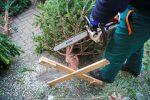 Kerstbomen Molenvliet-0113-36