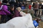Koeiemart-22102014-2298 © HansPieters.nl