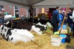 KoeienmarktWoerden20131023-02128
