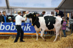 KoeienmarktWoerden20131023-02145