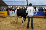 KoeienmarktWoerden20131023-02147