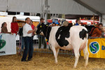 KoeienmarktWoerden20131023-02148