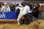 KoeienmarktWoerden20131023-02149
