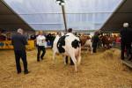 KoeienmarktWoerden20131023-02151