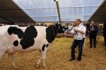 KoeienmarktWoerden20131023-02152