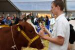 KoeienmarktWoerden20131023-02153