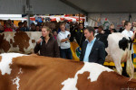 KoeienmarktWoerden20131023-02154