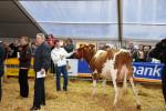 KoeienmarktWoerden20131023-02155