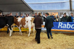KoeienmarktWoerden20131023-02170