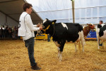 KoeienmarktWoerden20131023-02180