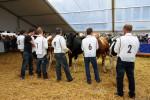 KoeienmarktWoerden20131023-02183