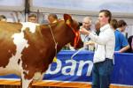 KoeienmarktWoerden20131023-02195