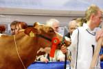 KoeienmarktWoerden20131023-02204